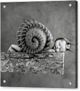 Julia Snail Acrylic Print by Anne Geddes