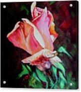 Julia's Rose Acrylic Print