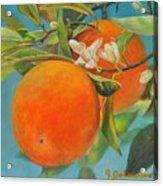 Jumelles Orange Acrylic Print