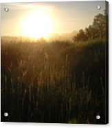 June Sunrise Over Dew On Grass Acrylic Print
