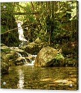 Jungle Appeal Acrylic Print