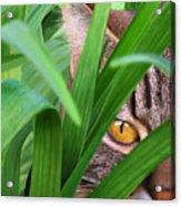 Jungle Cat Acrylic Print by Bob Nolin