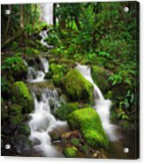 Jungle Falls Acrylic Print