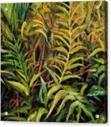 Jungle Ferns Acrylic Print