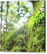 Jungle Gym Acrylic Print
