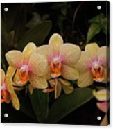 Jungle Orchids Acrylic Print