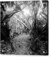 Jungle Trail Acrylic Print