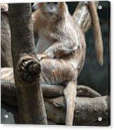 Jungle World Monkey2 Acrylic Print