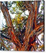 Juniper Bark Acrylic Print
