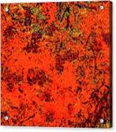 Juniper Berries 1 27 Acrylic Print