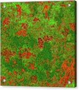 Juniper Berries 1 30 Acrylic Print