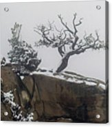 Juniper In Snow-signed-#2572 Acrylic Print