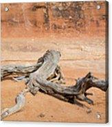 Juniper Log On Sand Acrylic Print
