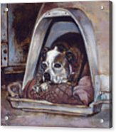 Junkyard Dog Acrylic Print by Harvie Brown