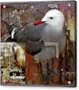 Junkyard Gull Acrylic Print