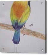 Juruva Bird Acrylic Print