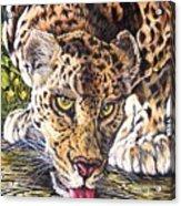 Just A Big Pussycat Acrylic Print