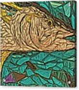 Just A Fish Acrylic Print
