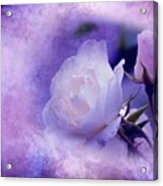 Just A Lilac Dream -4- Acrylic Print