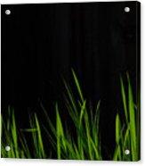 Just A Little Grass Acrylic Print