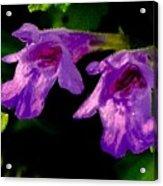 Just A Little Wild Flower Acrylic Print
