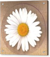 Just A Lonely Flower On Canvas Acrylic Print