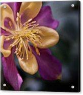 Just A Pretty Flower Acrylic Print
