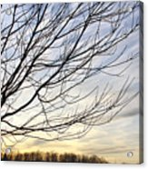 Just A Tree And Clouds Acrylic Print
