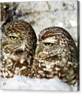 Just Act Casual And Maybe No One Will Notice Us Acrylic Print