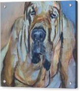 Just Another Magic Bloodhound Acrylic Print