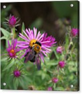 Just Beeing  Debbie-may Acrylic Print