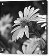 Just Black And White Acrylic Print