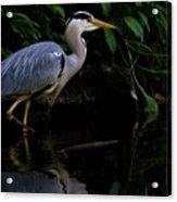 Just Fishing Acrylic Print