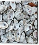 Just For The Shell Of It Acrylic Print