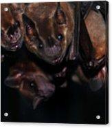 Just Hanging Around - Bats Acrylic Print