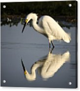 Just Like Looking In The Mirror Acrylic Print