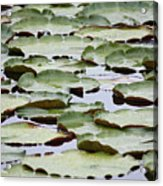 Just Lily Pads Acrylic Print