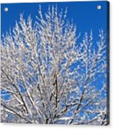 Just Look Up Acrylic Print