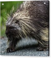 Just Minding My Own Business Acrylic Print