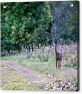 Just Off The Trail Acrylic Print