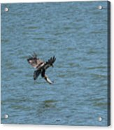 Juvenile Eagle Fishing Pickwick Lake Tennessee 031620161318 Acrylic Print