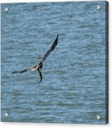 Juvenile Eagle Fishing Pickwick Lake Tennessee 031620161330 Acrylic Print