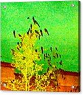 Kafka Summons His Birds To The Castle Acrylic Print