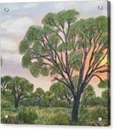 Kalahari Acrylic Print