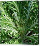 Kale Acrylic Print
