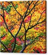 Kaleidoscope Of Autumn Color Acrylic Print