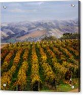 Kalthoff Common Vineyard Acrylic Print