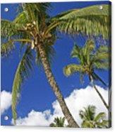 Kamaole Beach Acrylic Print by Ron Dahlquist - Printscapes