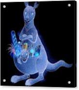 Kangaroo 02 Acrylic Print by Kestutis Kasparavicius
