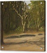 Kanha Forest Trail Acrylic Print